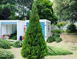 Malvern Xmas Trees